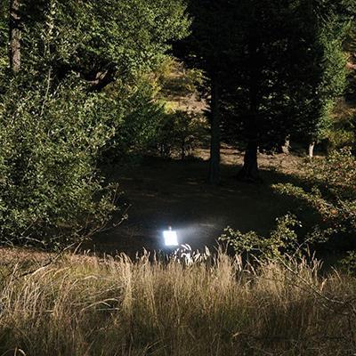 Neda Zarfsaz | Lightbox | 40 X 60 cm | Ed. 3 + AP | 1,700,000 T, Discount for Firefly (1,200,000 T  - Sold